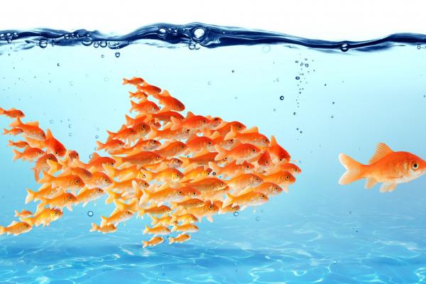 Leadership diffusa